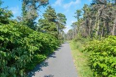 Πράσινη αλέα στην επαρχία Στοκ Εικόνες