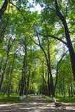 Πράσινη αλέα στο θερινό πάρκο Στοκ Εικόνες