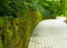 Πράσινη αλέα στο πάρκο περπατήματος στο νησί Mainau σε Germani Στοκ φωτογραφία με δικαίωμα ελεύθερης χρήσης