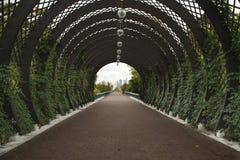 Πράσινη αλέα στο πάρκο Στοκ Φωτογραφίες