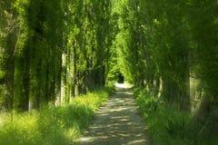 Πράσινη αλέα Στοκ εικόνες με δικαίωμα ελεύθερης χρήσης