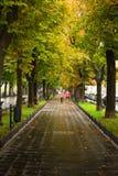 Πράσινη αλέα Στοκ Φωτογραφία