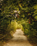 Πράσινη αλέα Στοκ Φωτογραφίες