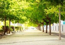 Πράσινη αλέα Στοκ φωτογραφία με δικαίωμα ελεύθερης χρήσης
