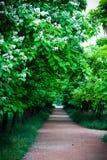 Πράσινη αλέα Στοκ εικόνα με δικαίωμα ελεύθερης χρήσης