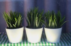 Πράσινη βροχή παραθύρων λουλουδιών υγρή στοκ εικόνες