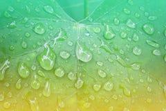 πράσινη βροχή φύλλων απελευθερώσεων Στοκ Εικόνα