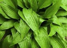 πράσινη βροχή φύλλων Στοκ Φωτογραφία