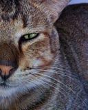 Πράσινη γάτα ματιών Στοκ φωτογραφία με δικαίωμα ελεύθερης χρήσης