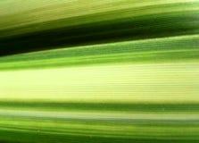 Πράσινη Γραμμή φύλλο 5 Στοκ φωτογραφίες με δικαίωμα ελεύθερης χρήσης