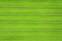 Πράσινη Γραμμή Στοκ Εικόνες
