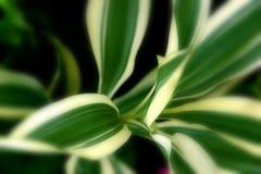 Πράσινη Γραμμή Στοκ Εικόνα