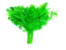 Πράσινη δέσμη του άνηθου Στοκ Εικόνα