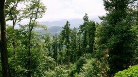 πράσινη δασώδης περιοχή στα βουνά Vosges στην Αλσατία Στοκ φωτογραφία με δικαίωμα ελεύθερης χρήσης