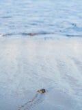 Πράσινη εκκόλαψη χελωνών Στοκ εικόνες με δικαίωμα ελεύθερης χρήσης
