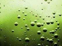 πράσινη ελιά ανασκόπησης Στοκ Εικόνα
