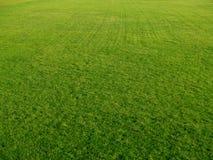 πράσινη εμφάνιση γκολφ Στοκ Εικόνες