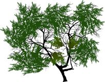 Πράσινη ενιαία πολύβλαστη απεικόνιση δέντρων Στοκ εικόνες με δικαίωμα ελεύθερης χρήσης