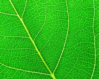 πράσινη επιφάνεια φύλλων Στοκ φωτογραφία με δικαίωμα ελεύθερης χρήσης