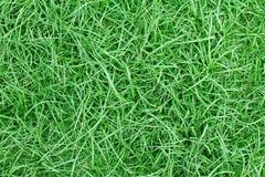 Πράσινη επιφάνεια χλόης, πράσινη σύσταση χλόης Στοκ φωτογραφίες με δικαίωμα ελεύθερης χρήσης