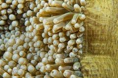 Πράσινη λεπτομέρεια πλοκαμιών anemone Στοκ φωτογραφία με δικαίωμα ελεύθερης χρήσης