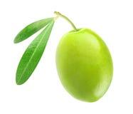 Πράσινη ελιά Στοκ Εικόνες