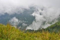 Πράσινη ζούγκλα και άσπρη ομίχλη στη βαθιά κοιλάδα Στοκ Εικόνες
