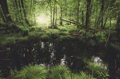 Πράσινη ζούγκλα με τον ποταμό Στοκ Εικόνα