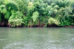 Πράσινη ζούγκλα με το ρέοντας ποταμό Στοκ φωτογραφία με δικαίωμα ελεύθερης χρήσης