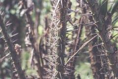 Πράσινη ζούγκλα στο νησί του Μπαλί, Ινδονησία Τροπική σκηνή τροπικών δασών Στοκ φωτογραφία με δικαίωμα ελεύθερης χρήσης