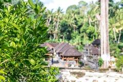 Πράσινη ζούγκλα στο νησί του Μπαλί, Ινδονησία Τροπική σκηνή τροπικών δασών Στοκ εικόνες με δικαίωμα ελεύθερης χρήσης