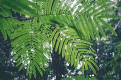 Πράσινη ζούγκλα στο νησί του Μπαλί, Ινδονησία Τροπική σκηνή τροπικών δασών Στοκ εικόνα με δικαίωμα ελεύθερης χρήσης