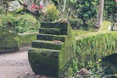 Πράσινη ζούγκλα στο νησί του Μπαλί, Ινδονησία Τροπική σκηνή τροπικών δασών Στοκ Φωτογραφίες