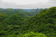 Πράσινη ζούγκλα στο νησί BA γατών, Βιετνάμ Στοκ φωτογραφία με δικαίωμα ελεύθερης χρήσης
