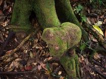 Πράσινη ζούγκλα, τροπικό δάσος δέντρων του εθνικού πάρκου βουνών Inthanon Στοκ φωτογραφία με δικαίωμα ελεύθερης χρήσης