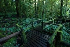 πράσινη ζούγκλα Στοκ φωτογραφία με δικαίωμα ελεύθερης χρήσης