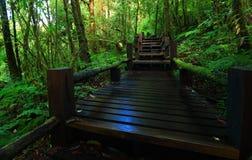 πράσινη ζούγκλα Στοκ Εικόνες
