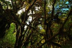 πράσινη ζούγκλα Στοκ Φωτογραφίες