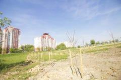Πράσινη ζώνη στη μητρόπολη στοκ εικόνες