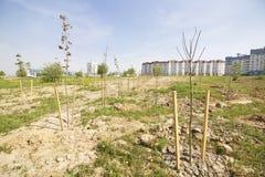 Πράσινη ζώνη στη μητρόπολη στοκ φωτογραφίες με δικαίωμα ελεύθερης χρήσης