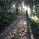 Πράσινη ηρεμία δέντρων δασικών δρόμων στοκ εικόνες