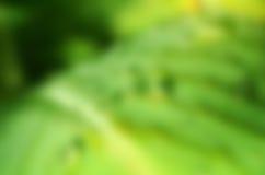 Πράσινη θαμπάδα φύλλων Στοκ Εικόνες