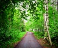 Πράσινη διάβαση με το βρώμικο δρόμο στοκ φωτογραφία με δικαίωμα ελεύθερης χρήσης