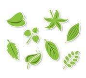 πράσινη διανυσματική συλλογή φύλλων Στοκ Εικόνες