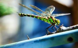 Πράσινη λιβελλούλη στο μπλε υπόβαθρο Στοκ Φωτογραφίες