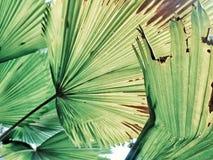 Πράσινη κάλυψη στοκ φωτογραφία με δικαίωμα ελεύθερης χρήσης