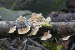 Πράσινη κάμπια καλυμμένο στο μύκητας άκρο στοκ φωτογραφίες με δικαίωμα ελεύθερης χρήσης