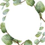 Πράσινη κάρτα ευκαλύπτων Watercolour στο άσπρο υπόβαθρο ελεύθερη απεικόνιση δικαιώματος