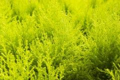 Πράσινη κίτρινη φτέρη στο nuture Στοκ εικόνα με δικαίωμα ελεύθερης χρήσης
