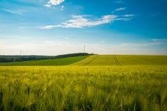 Πράσινη και κίτρινη εποχή τομέων σίτου την άνοιξη κάτω από το μπλε ουρανό, ευρεία φωτογραφία r στοκ εικόνα